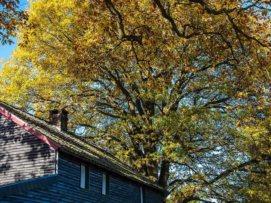 A tree with fall colors overhanging a home's roof